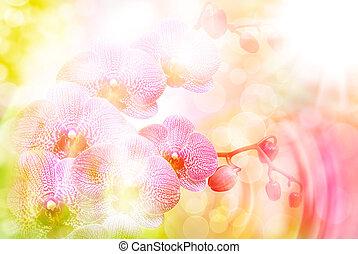 蘭, 花, 終わり
