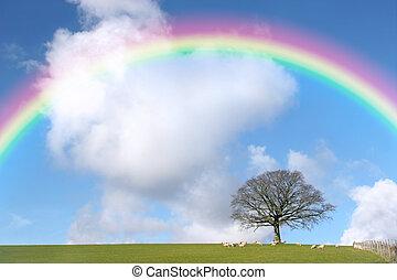 虹, 上に, オーク, 冬の 木