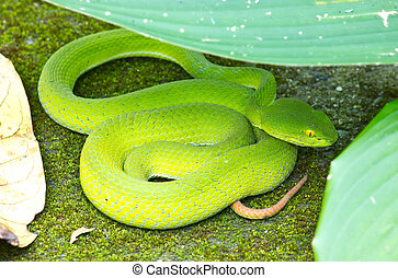 蛇, 绿色