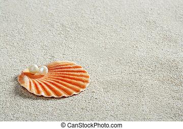蛤, 宏, 珍珠, 沙子, 壳, 怀特海滩