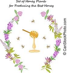 蜂蜜, 植物, セット
