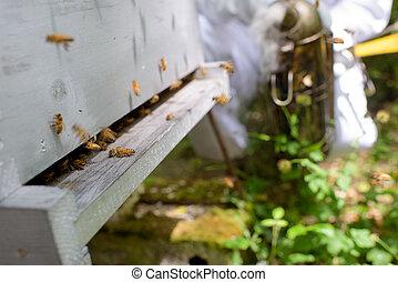 蜂, から, フレーム, 行く