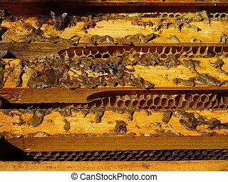 蜂, 箱, 6