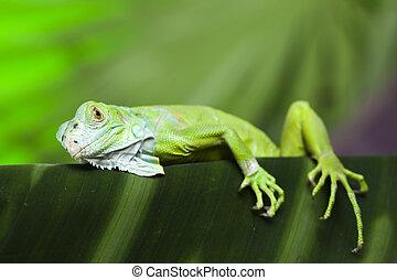 蜥蜴, 明亮, 鮮艷, 生動, 主題