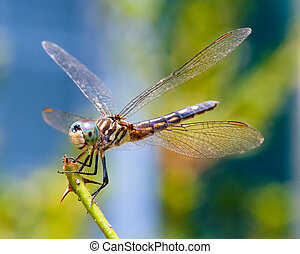 蜻蜓, 向上關閉