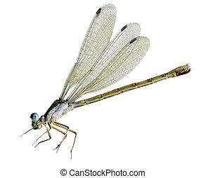 蜻蜓, 微小