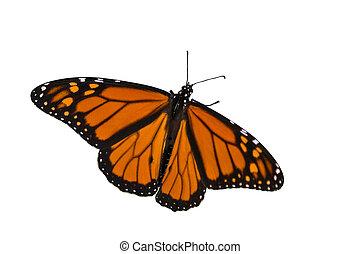 蝴蝶, 传播, 它, 背景, 帝王, 白色, 机翼