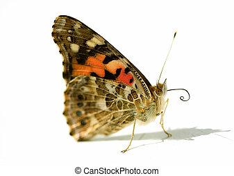 蝴蝶, 关闭