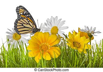 蝴蝶, 在上, 雏菊, 花