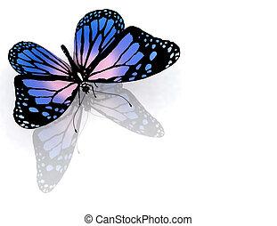 蝴蝶, 在上, a, 白色