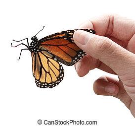 蝴蝶, 帝王, 手