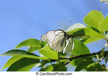 蝴蝶, 花, 二