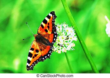 蝶, そして, 花