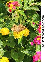 蝶, ∥で∥, 美しい, 花, 中に, ∥, 自然