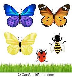 蝶, セット, 昆虫