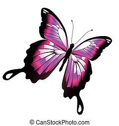蝶, ピンク, 美しい, 隔離された, 白