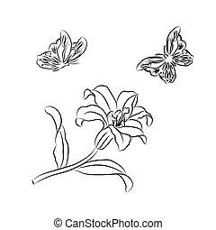 蝶, ユリ, sketch.