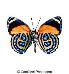 蝶, 上に, a, 白い背景, 中に, 高く, 定義
