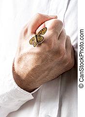 蝶, 人, 彼の, くいしばられる, 手
