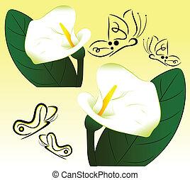 蝶, 白い花
