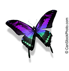 蝶, 白, 背景, 隔離された