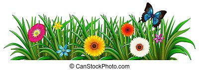 蝶, 花, 庭, 咲く