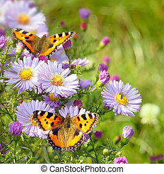 蝶, 花, 2