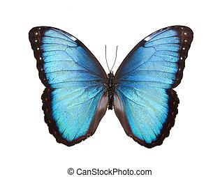 蝶, 隔離された, 白
