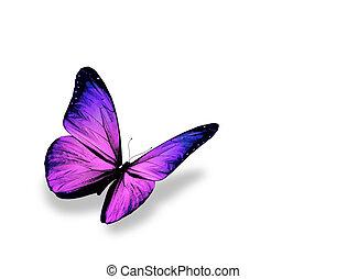 蝶, 隔離された, 背景, すみれ, 白