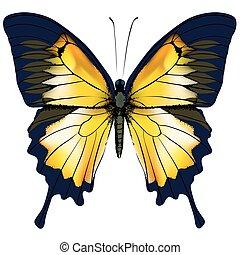 蝶, 隔離された, 黄色, イラスト, 背景, 白, butterfly.