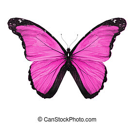 蝶, 隔離された, morpho, すみれ, 白