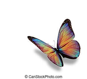 蝶, 隔離された, morpho, 背景, 白