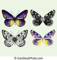 蝶, hand-drawing., セット, ベクトル, カラフルである
