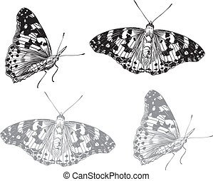 蝶, set., ベクトル