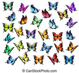 蝶, vector., カラフルである, 大きい, directions., コレクション, 別, 飛行