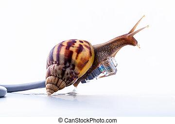 蝸牛, 由于, rj45, 連接器, 象征, 相片, 為, 慢, 網際網路, connection., 寬帶, 連接,...