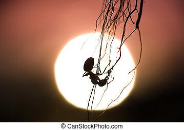 螞蟻, 傍晚, 黑色半面畫像, 背景, 懸挂