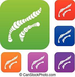 螺旋, 細菌, 集合, 彙整
