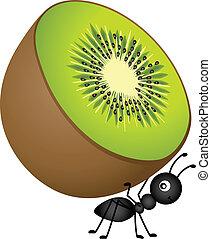 蟻, キーウィ, 届く