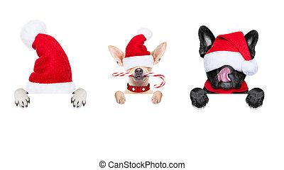 行, 在中, 圣诞老人, 狗