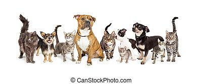 行, 在中, 猫, 同时,, 狗, 一起, 在怀特上
