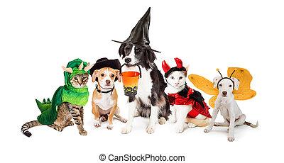 行, 在中, 猫, 同时,, 狗, 在中, 万圣节前夜, 服装