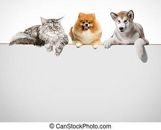 行, 在中, 猫, 同时,, 狗, 悬挂, 他们, paws, 结束, a, 白色, banner.
