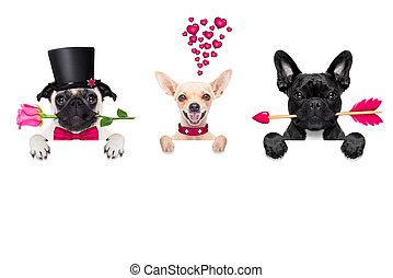 行, 在中, valentines, 狗, 在爱中