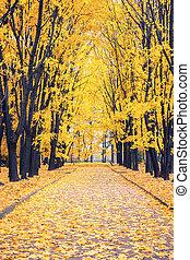 衚衕, 在, 秋天, 公園
