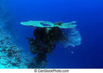 表格珊瑚色