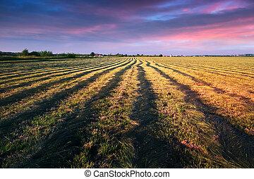 被割, 干草, 領域
