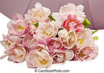 被成雜色, 粉紅色, 鬱金香