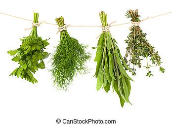 被隔离, 藥草, 繩子, 背景, 懸挂, 新鮮, 白色