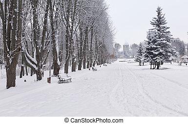 被雪覆蓋, 風景, 在城市, park., ternopil, 烏克蘭